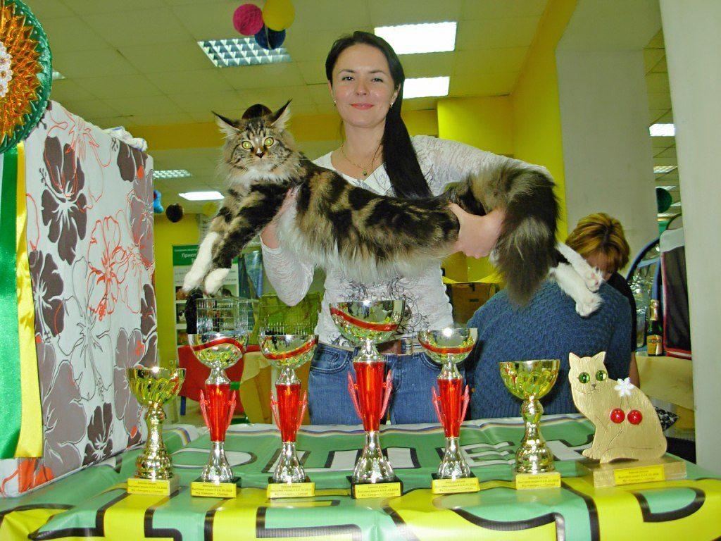 Международная выставка кошек г.Самара «ЗИМНЯЯ ВИШНЯ -2018»